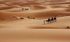 two-camel-caravans-in-the-desert